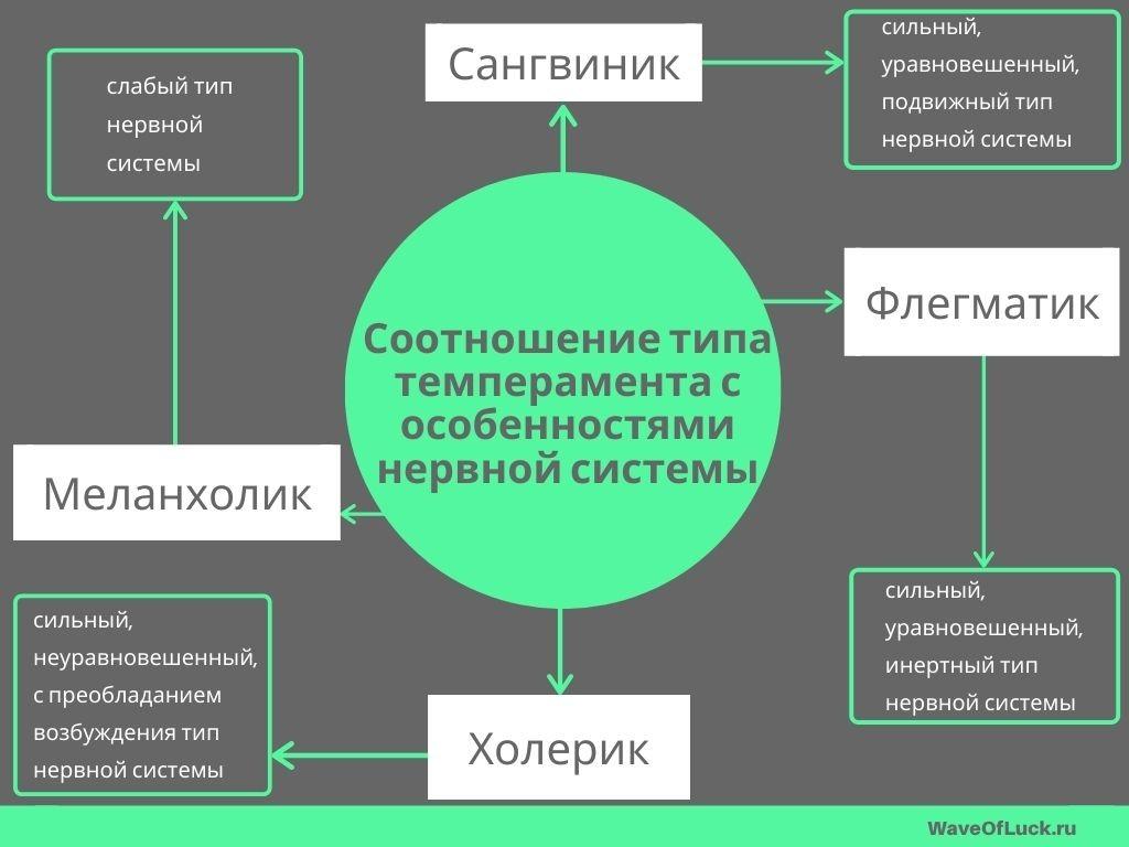 4 типа темперамента у человека